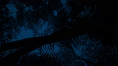 Gliding Under Jungle Plants At Night Stock Footage