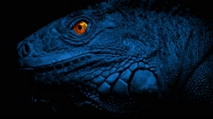 Lizard With Glowing Eyes At Night Stock Footage