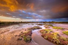 Tidal Channel in Estuary marshland at sunrise Stock Photos