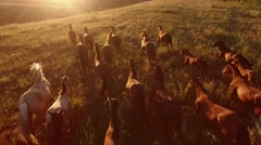Horses are galloping. Stock Footage