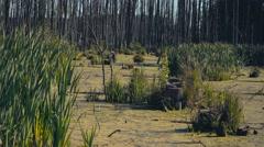 Marshland. Impassable terrain. Stock Footage