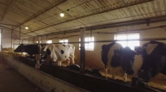 Cows in a stall. Arkistovideo