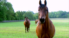 Horse Slow Motion Stock Footage