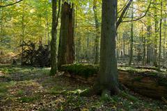 Old linden tree broken lying Stock Photos