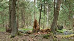 Springtime wetland stand of Bialowieza Forest Stock Photos