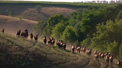 Large group of horses. Stock Footage