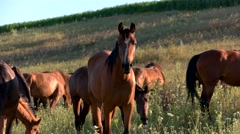 View of Horses eat grass. Stock Footage