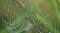 Spider net in the bog Stock Footage