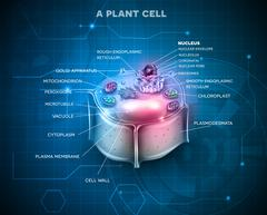 Plant Cell anatomy scientific background Stock Illustration