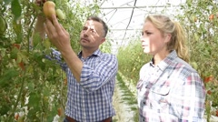 Organic farmer with student walking in greenhouse Stock Footage