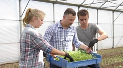 Students in agriculture planting organic lettuce in greenhouse Stock Footage