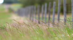 Barbed wire fence with grass blowing in the foreground Stock Footage