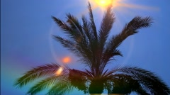 Palm Tree in Breeze with Sun lens optical flare Stock Footage