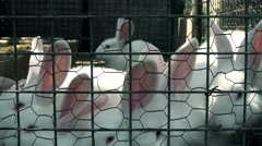 Rabbit in the ranch  cage Stock Footage