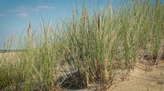 Grass on the dunes. Summer holidays concept Stock Footage