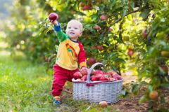 Baby boy picking apples in fruit garden Kuvituskuvat