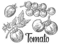 Set of hand drawn tomatoes isolated on white background. Tomato, half and sli Stock Illustration