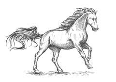 Running galloping white horse sketch portrait Stock Illustration