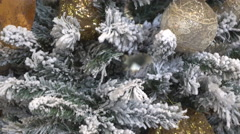 Tilt Down of Snow-Dusted Fir Tree Stock Footage