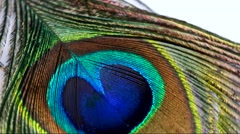 A close up of a rotating peacock feather Stock Footage