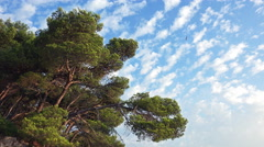 Tree Branches and Beautiful Cloudy sky on a Sunny Day Stock Footage