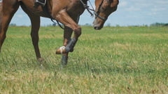 Close-up view on the hooves of horse's legs at a field Stock Footage