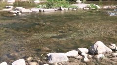 Salmon spawning run at the bowmanville fish ladder Stock Footage