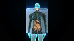 Zooming female Human body scanning internal organs, Digestion system. Arkistovideo