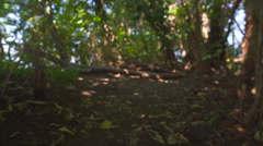 Exploring the woods Stock Footage