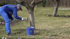 Male garden specialist whitewash trees in spring season Stock Footage