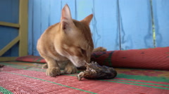 Street ginger cat eating fish head Stock Footage