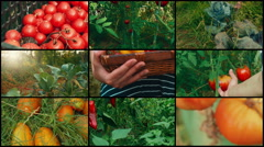 4K Video Wall with Greenhouse Organic Vegetables Stock Footage