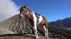 Horse waiting for customers at Mount Bromo on Java island, Indonesia Stock Footage