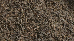 Anthill and Ants Stock Footage