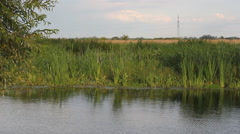 Thickets of reeds in the wind near a river in the countryside. Stock Footage