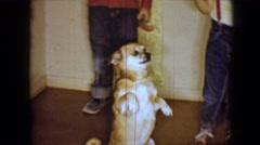 1959: dog begging as kids eat ice cream DISNEYLAND, CALIFORNIA Stock Footage