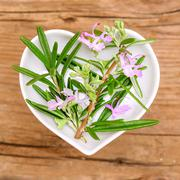 Homeopathy and cooking with rosemary Stock Photos