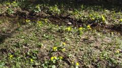 Wilderness Landscape Stock Footage