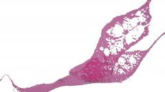 Close-up view of pink splashing. Colored paint Stock Footage