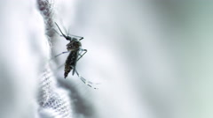 Closeup shot of Mosquito on fabric Stock Footage