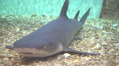 Close up shark on the bottom Stock Footage