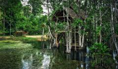 Old dilapidated shack on stilts in the jungle Stock Photos