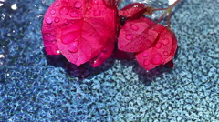 Bougainvillea flowers float in textured bowl Stock Footage