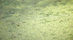 In italy pond abstract water Stock Footage