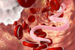 Parasite in human blood Stock Illustration