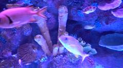 Different species of fish in aquarium fcc Stock Footage