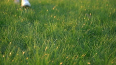 Woman Seen By Feet Only Walks On Green Grass Stock Footage