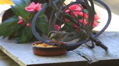 Backyard birds on spinning garden ornament Stock Footage