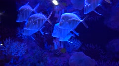 School of exotic fish Stock Footage