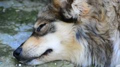 Head mongrel sleeping near wall Stock Footage